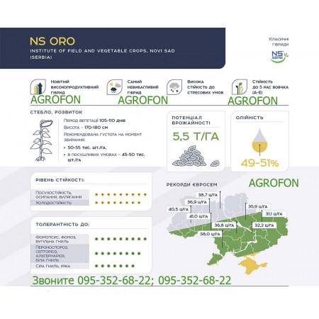 Семена  подсолнечника  NS ORO. Потенциал урожая 5,5ц/га. Масличность 49-51%.Класический гибрид.