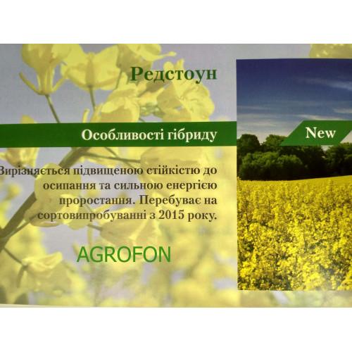 Выращивание озимого рапса, технология выращивания озимого рапса ... | 500x500