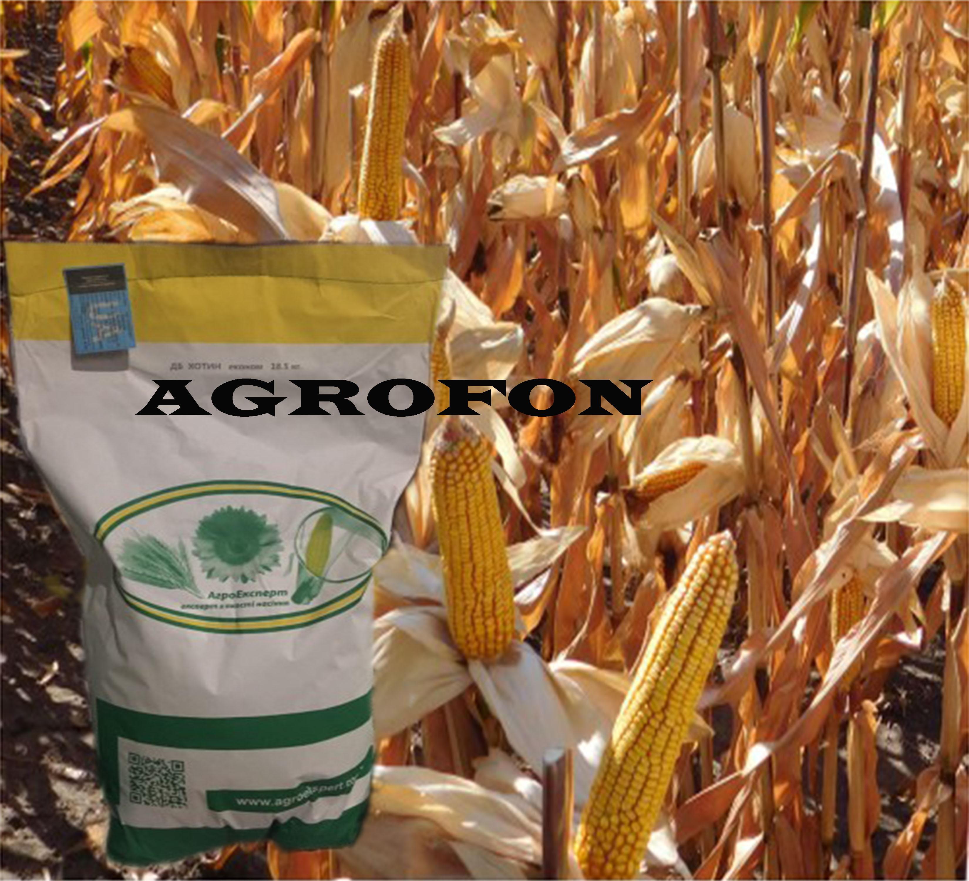 семена кукурузы Хотин