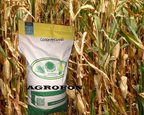 семена кукурузы Солонянський
