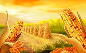 семена кукурузы, купить семена кукурузы на посев,кукуруза гибрид,кукуруза инструкция