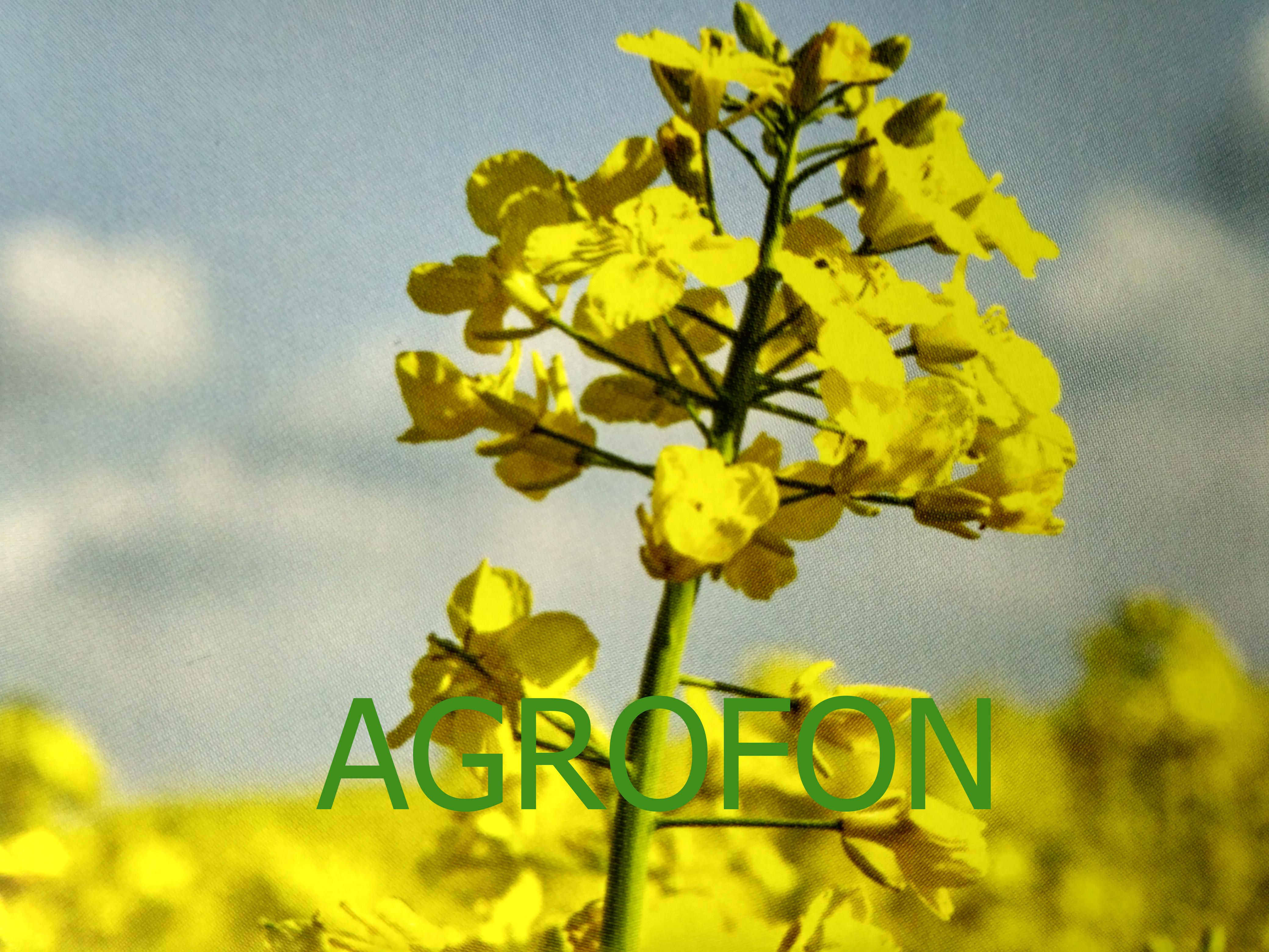 Рапс озимый - Решения для сельского хозяйства | 3120x4160