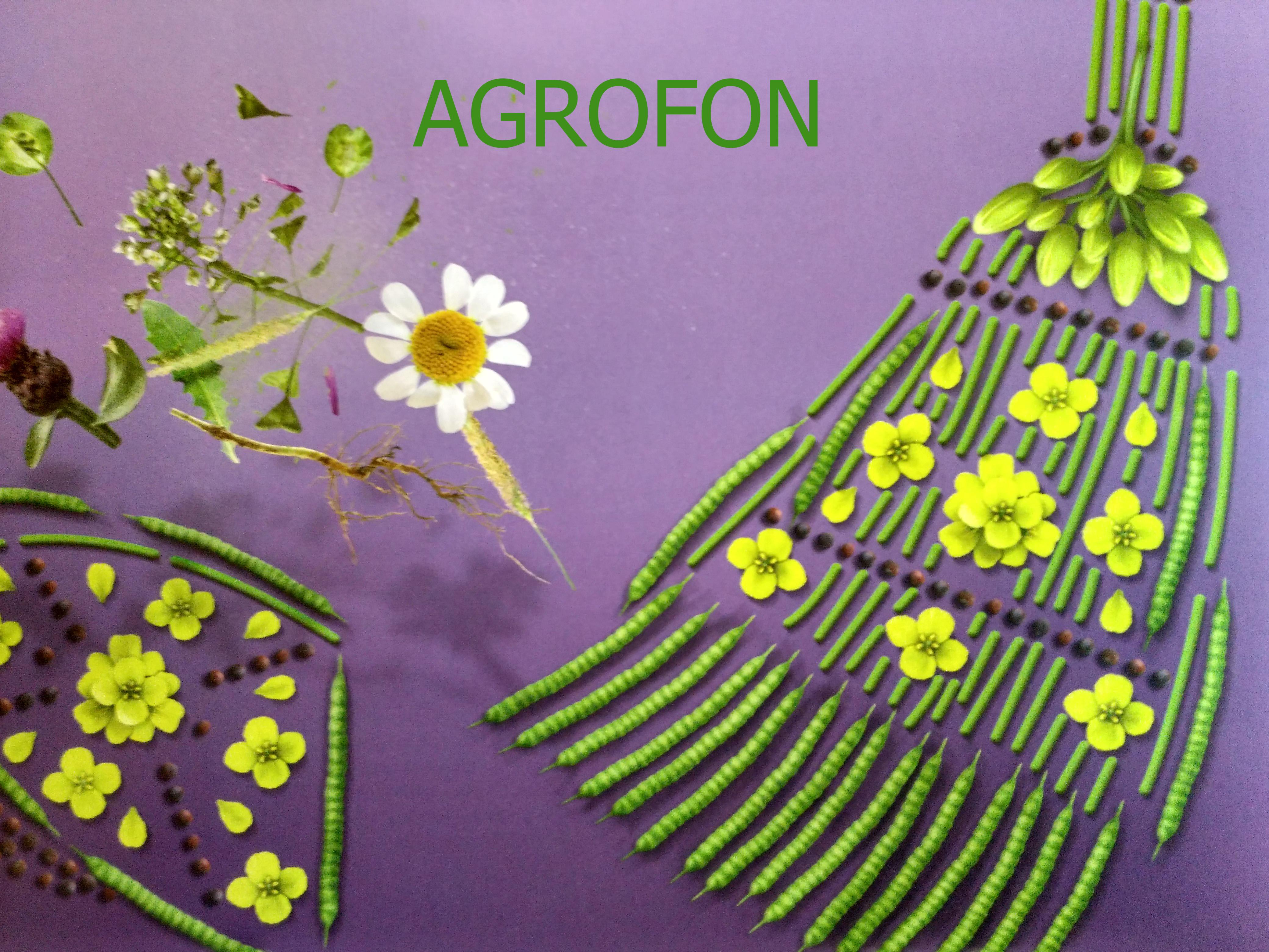 семена рапса, купить семена рапса,рапс яровой,озимый рапс инструкция,рапс глифосат