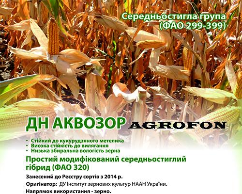 семена кукурузы Аквозор