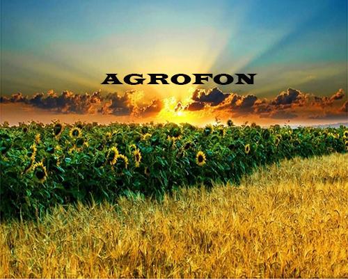 подсолнечник НС Х 6749, семена подсолнечника сербской селекции НС-Х-6749, купить семена подсолнечника под гранстар НСХ 6749, подсолнух 7+ рас стойкости к заразихе