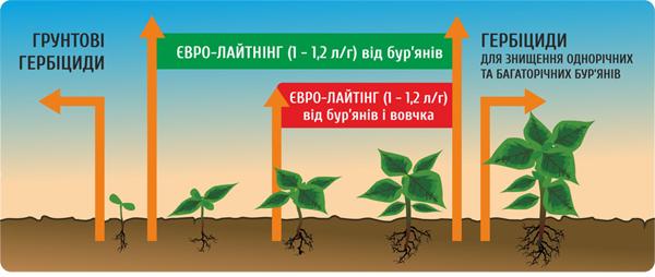 семена подсолнечник НС Имисан